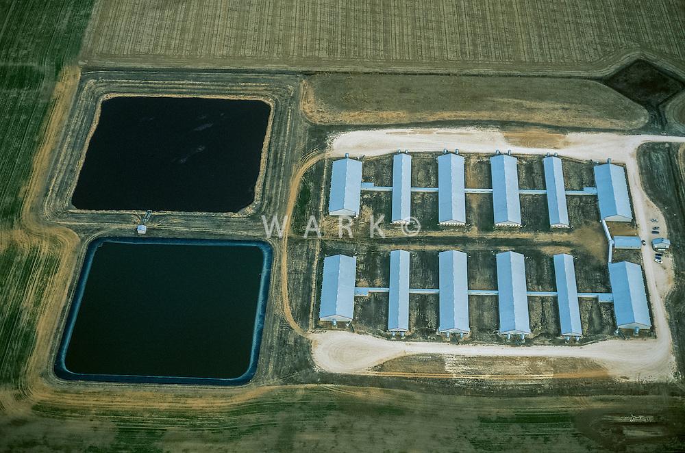 Hog Farm, Perrytown, Texas. 2002