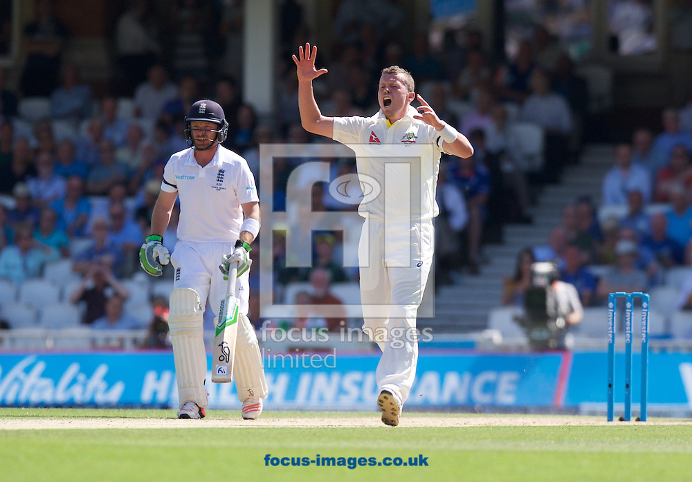 Bowler Peter Siddle of Australia makes an appeal during the 5th Investec Ashes Test Match match at the Kia Oval, London<br /> Picture by Alan Stanford/Focus Images Ltd +44 7915 056117<br /> 22/08/2015