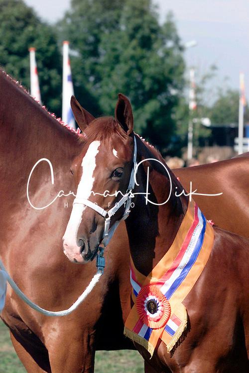 KWPN Paardendagen Ermelo 2000<br />Photo &copy; Dirk Caremans