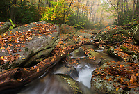 A fallen log leads downstream along Upper Boone Fork Creek in Western North Carolina.  Part of the Blue Ridge and Southern Appalachian Mountains, Boone Fork is a headwater stream that shows beautiful color each autumn.