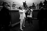 In this photo taken Dec. 5, 2010, a horse owner wearing in a white suit readies his horse for competition in the Caribbean Classic Series at the Rinconada racetrack in Caracas, Venezuela.