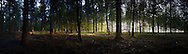 View of Stansted Woods, Chichester, Sussex.<br /> Picture date: Thursday October 27, 2016.<br /> Photograph by Christopher Ison &copy;<br /> 07544044177<br /> chris@christopherison.com<br /> www.christopherison.com