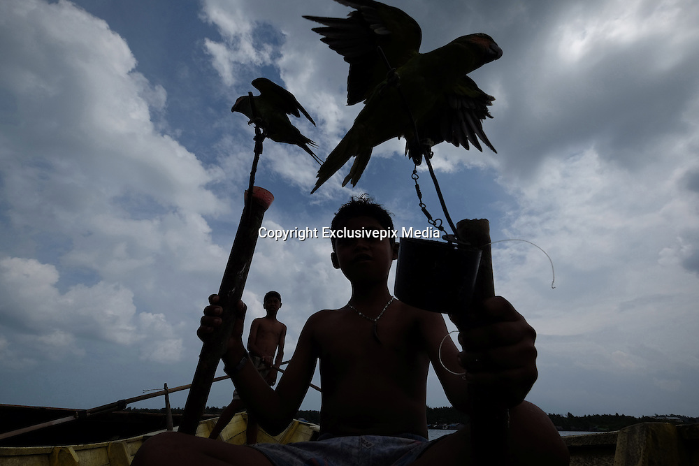 LINGGA, INDONESIA - <br /> <br /> Sea Tribe Children in Indonesia, Last Nomad Tribe Sea in Indonesia<br /> <br /> Children of sea tribal or called sea people were playing with a parrot in a Kajang canoe at Tajur Biru island in Lingga, Riau Islands province, Indonesia.<br /> Sea Tribe or called sea people who inhabit Tajur Biru Island, Lingga Regency, Riau Islands Province - Indonesia, sea people is the last existing tribe. <br /> only 15 families 52 people in total. Sea people are wandering tribes who live in the sea. The indigenous people called the sea because it has characteristics specific life, such as family life in the boat and wander along the waters.<br /> Historically, Sea People used to be a pirate, but it plays an important role in the kingdom of Srivijaya, the Sultanate of Malacca and Johor Sultanate. They keep the straits, repel pirates, guiding traders to harbor , and maintain their hegemony in the region.<br /> ©Exclusivepix Media