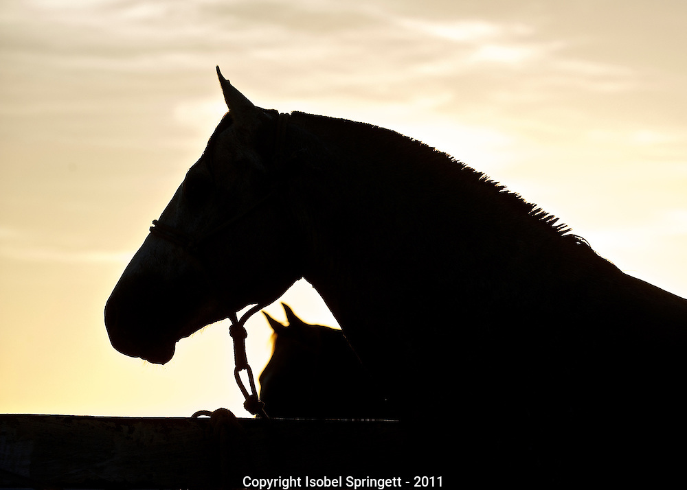 Pantanal Horse Silhouette. Courtenay, Matto Grosso, Brazil, Isobel Springett