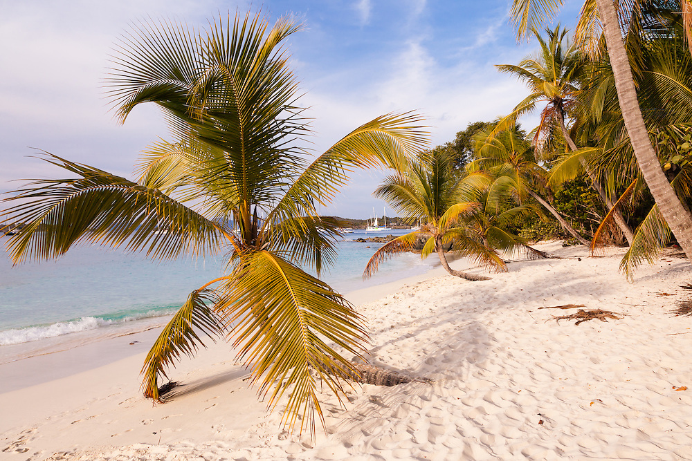 Three perfect palms along the coastline of Honeymoon Bay represent an idyllic paradigm.