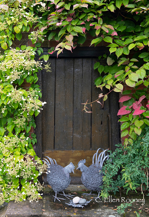 Hen sculptures in front of a wooden door surrounded by Aktinidia kolomikta and Hydrangea petiolaris at Stockton Bury Gardens, Leominster, Herefordshire, UK