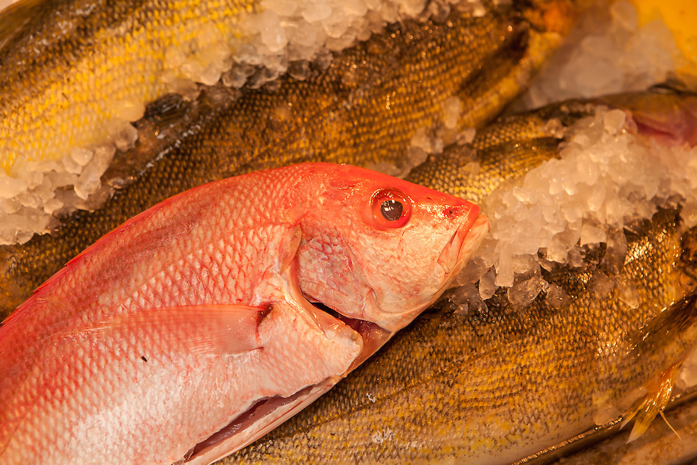 Fish for sale in a fishmarket in New York City's Chinatown.