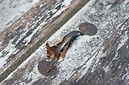 9/15/12 11:59:40 AM - Washington Crossing, PA.. -- Scenes from photo walk through Washington Crossing State Park September 15, 2012 in Washington Crossing, Pennsylvania. -- (Photo by William Thomas Cain/Cain Images)