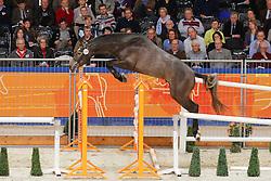 226 - Finalist Fortuna<br /> KWPN Hengstenkeuring 's Hertogenbosch 2013<br /> © Dirk Caremans