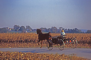 Horse and Open Farm Buggy, Lancaster Co., PA