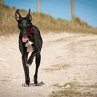 Images of Albert the Lurcher