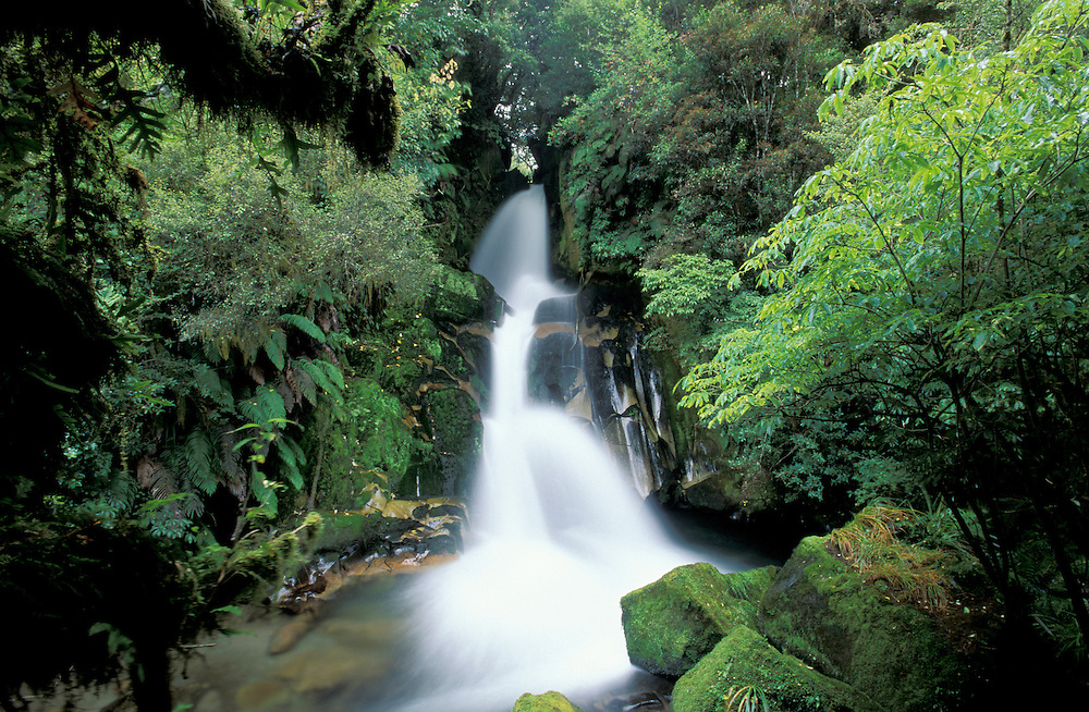 Waiatiu Waterfalls, Whirinaki Forest Park near Urewera National Park, Northland, North Island, New Zealand