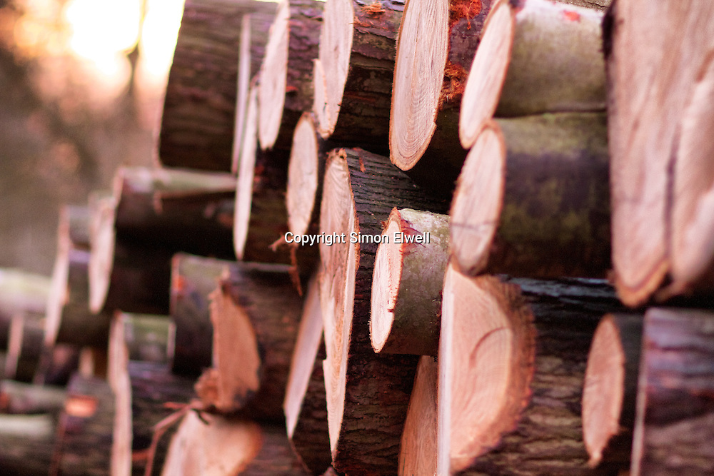 Stack of freshly felled logs