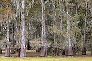 2018-11-13 Henderson Swamp