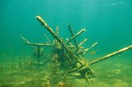 Underwater Scene-Fish attractor<br /> <br /> ENGBRETSON UNDERWATER PHOTO