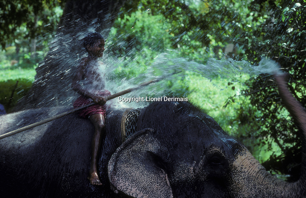 Athulla, 15, learns how to become an elephant-keeper or mahut with Rani a 32 years old female in the Sri Lankan jungle. 1999. Kodachrome. Story shot on assignment for the National Geographic France.