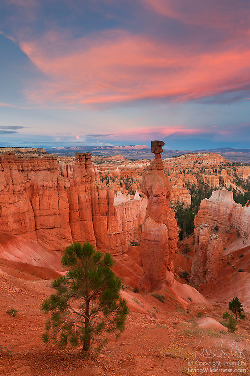 A tall hoodoo known as Thor's Hammer stands in Bryce Canyon National Park, Utah.