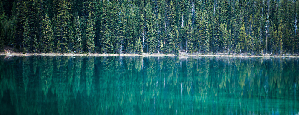 Alberta Canada Trees reflecting in a clear lake in the Rocky Mountains