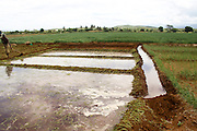 Africa, Tanzania, Lake Eyasi National Park onion farming Using field flooding for irrigation