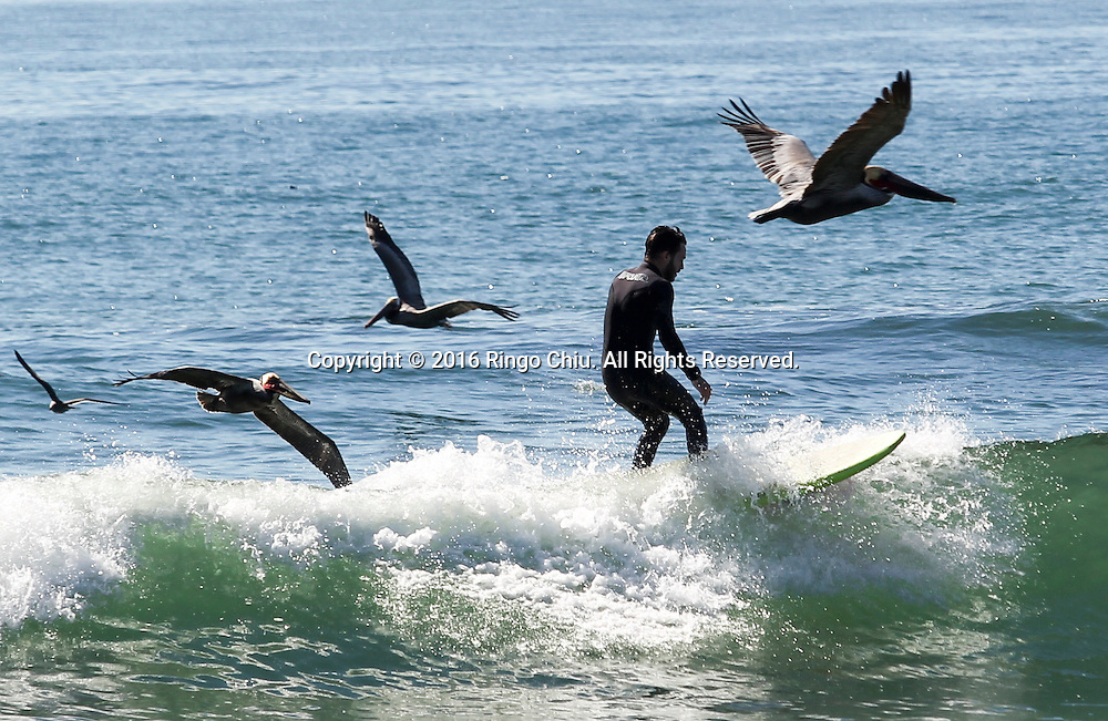 A surfer and birds enjoy the warm weather at Venice Beach in Los Angeles, Feb. 10, 2016. A midwinter heat wave baked Southern California again Tuesday, breaking more February records as temperatures soared into the 80s and 90s even as the Santa Ana winds that stoked the atmosphere began to fade. The forecasters said more highs are expected in the high 80s and low 90s today. The heat, accompanied by wind and by low humidity, will keep the danger of wildfire elevated, but no red flag warnings<br /> are in effect.(Photo by Ringo Chiu/PHOTOFORMULA.com)<br /> <br /> Usage Notes: This content is intended for editorial use only. For other uses, additional clearances may be required.