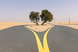 New desert cycle track at Al Qudra in Dubai United Arab Emirates