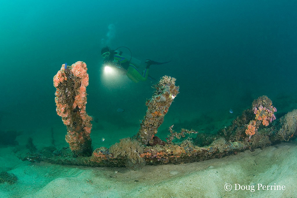 diver explores the wreck of the San Quentin or San Quintin, a Spanish gunboat sunk in 1898 during the Spanish-American War between Grande and Chiquita Islands at the entrance to Subic Bay, Philippines; wreckage is scattered over a reef at a depth of 9-18 m;<br /> MR 379
