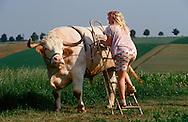 DEU, Deutschland: Hausrind (Bos taurus), Bauerstochter Marlene stiegt mit einer Leiter auf ihren Rennochsen Falko, Falko ist ein Ochse von 24 Zentnern und nimmt an Ochsenrennen teil, Marlene trainiert und reitet ihn, Rasse: Fleckvieh, Bayern, Süddeutschland | DEU, Germany: Domestic cattle (Bos taurus), farmer's daughter Marlene mounting with a leader race ox Falko, Falko is a ox of 24 centner and taking part in oxen races, Marlene coaching and riding it, race: Simmental Cattle, Bavaria, Southern Germany |