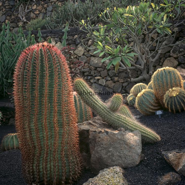 Jardin de Cactus, Guatiza, Lanzarote, Canary Islands