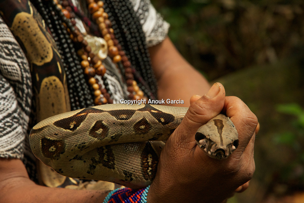 femelle boa dans les mains de Ishan Virgulinio Huni Kuin | female boa in the hands of Ishan Virgulinio Huni Kuin