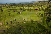 Rice paddy fields contoured across landscape, Bali, Indonesia