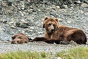 A grizzly bear sow rests alongside her spring cubs on the shore of the lower lagoon at the McNeil River State Game Sanctuary on the Kenai Peninsula, Alaska. The remote site is accessed only with a special permit and is the world's largest seasonal population of brown bears.