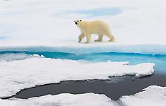 Svalbard #3 2007