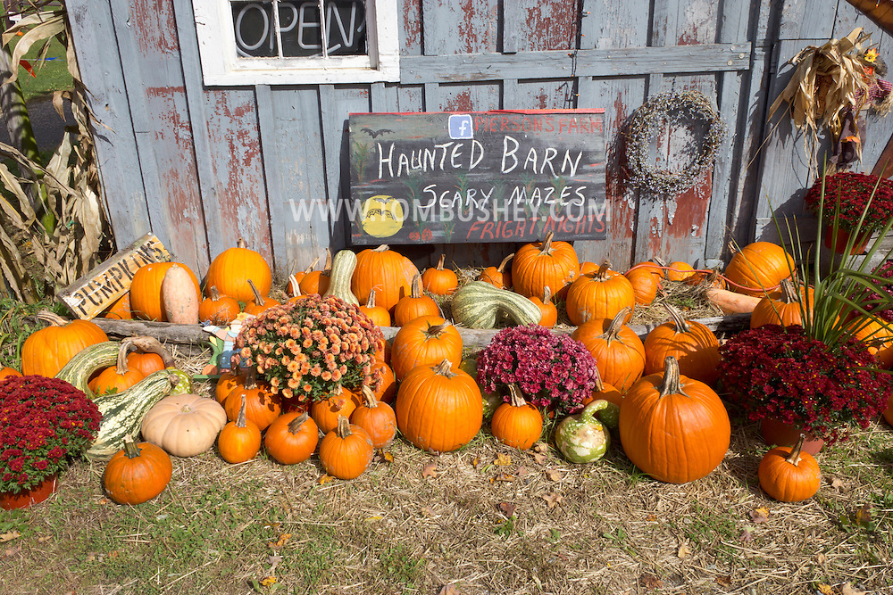 Mount Hope, New York - Pumpkins and other Halloween decorations outside a barn at Pierson's Farm on Oct. 20, 2012.