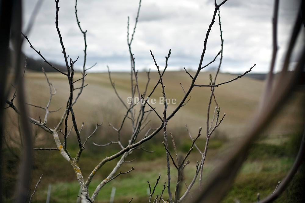 twigs of a walnut tree in rural landscape France