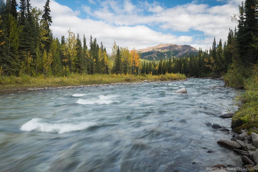 Fall color along Riley Creek, Denali National Park, Alaska