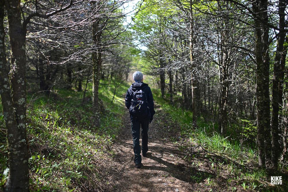 Valdivian Forest