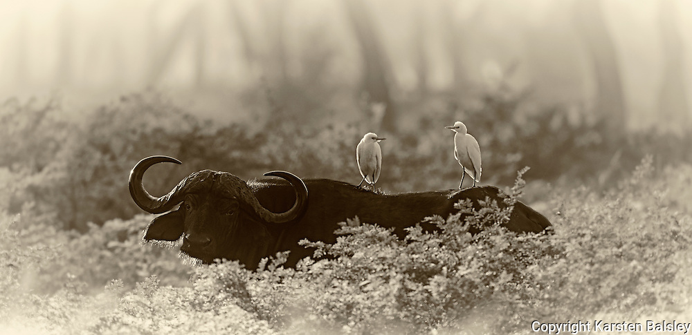 &ldquo;African Dreams&rdquo;                                                Zimbabwe<br />