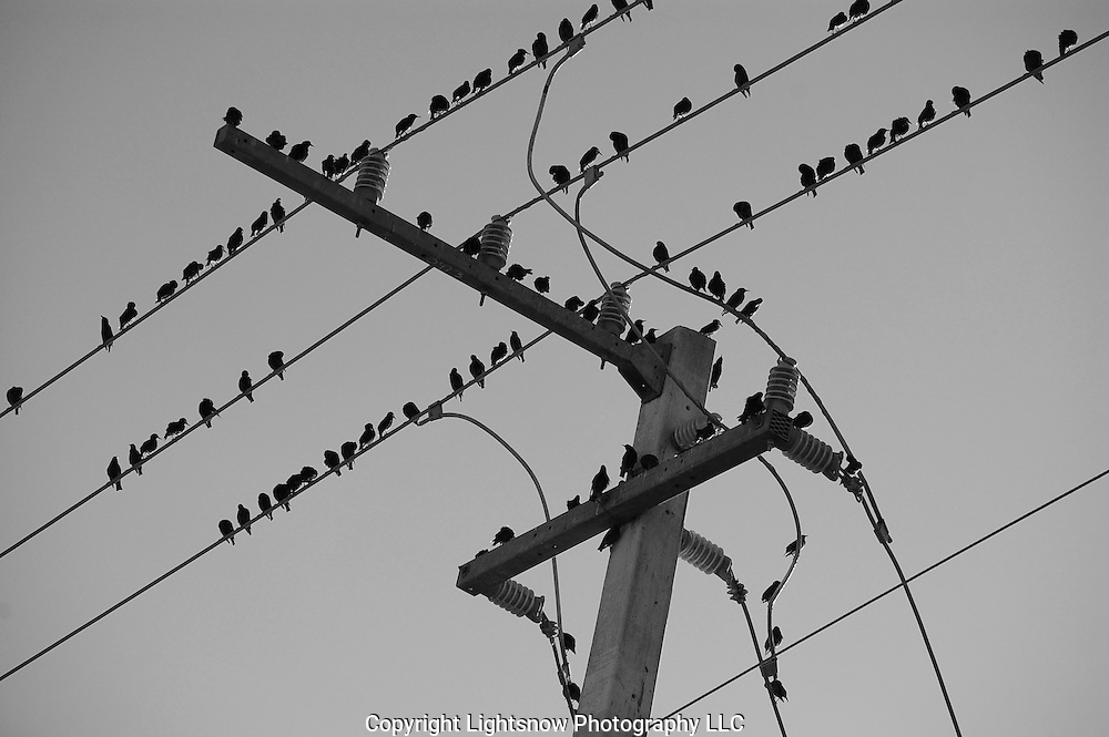 This is a photograph of birds on high tension wires in an urban setting.