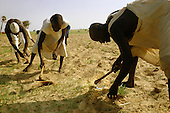 Agriculture in Africa, Latin America: plow, plant, harvest, slash and burn, biodiversity,  cattle