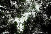 Ipaba_MG, Brasil..Reserva Particular do Patrimonio Natural (RPPN) fazenda Macedonia. ..The Private Reserve of Natural Heritage (RPPN), Macedonia farm...Foto: JOAO MARCOS ROSA / NITRO
