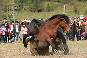 LIUZHOU, CHINA - JANUARY 30: <br /> <br /> Shocking images of Two horses fighting during a horse competition at Rongshui Miao Autonomous County on January 30, 2017 in Liuzhou, Guangxi Zhuang Autonomous Region of China. Miao people held a horse fighting competition on the third day of the Lunar New Year at Rongshui Miao Autonomous County in Liuzhou. <br /> ©Exclusivepix Media