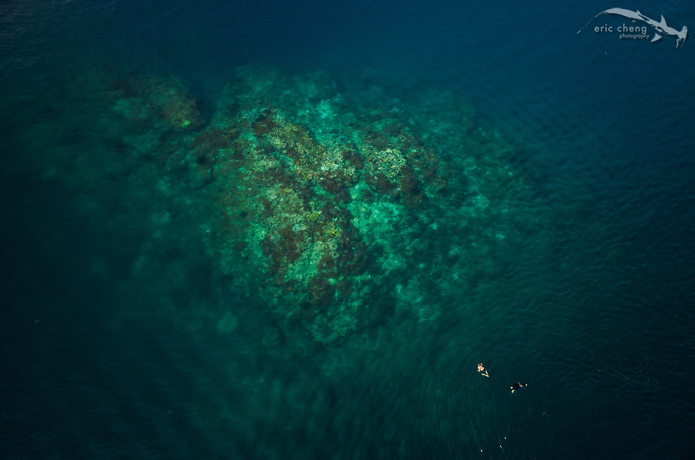 Aerial view of swimmers near the famous scuba diving dive site Cannibal Rock in Horseshoe Bay, Komodo National Park, Indonesia.
