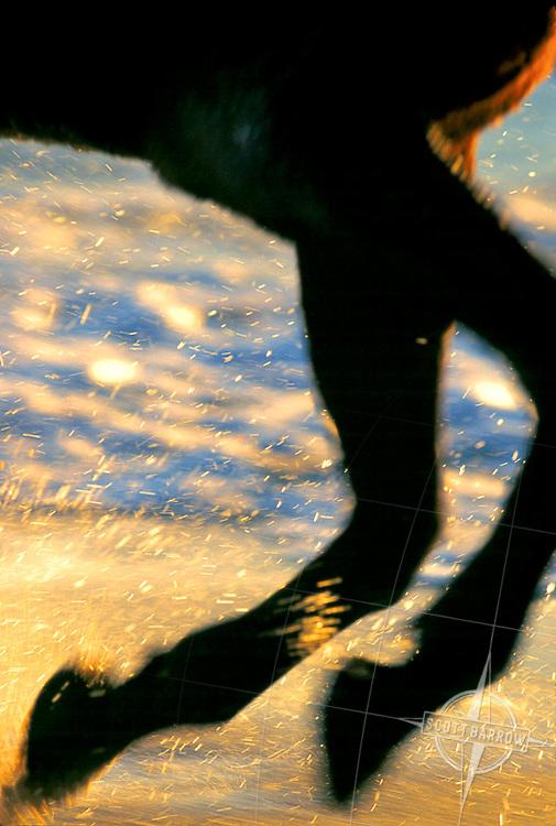 Horse's legs running through the surf at sunrise.