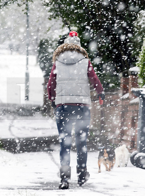 © Licensed to London News Pictures. 29/04/2016. Leeds UK. Picture shows a dog walker in the snow this morning. Leeds woke to a covering of snow this morning & is expected to get further snow showers over the weekend. Photo credit: Andrew McCaren/LNP