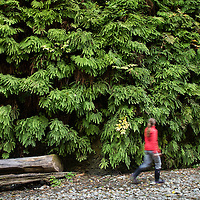 A woman hikes up a stream bed into Fern Canyon, a canyon in the Prairie Creek Redwoods State Park in Humboldt County, California, USA. It was one of the shooting locations of the movie Jurassic Park 2: The Lost World.