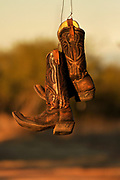 Old cowboy boots hang from a tree, Green Valley, Arizona, USA.