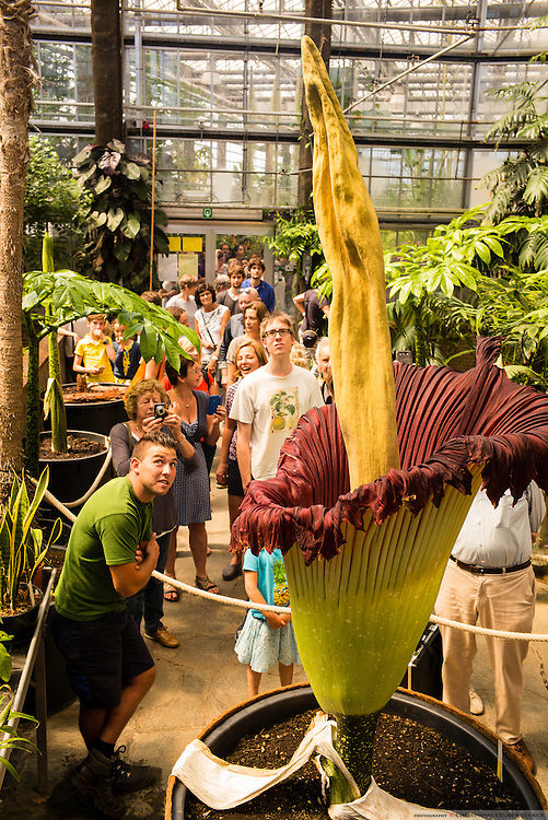 Titan Arum at the Ugent