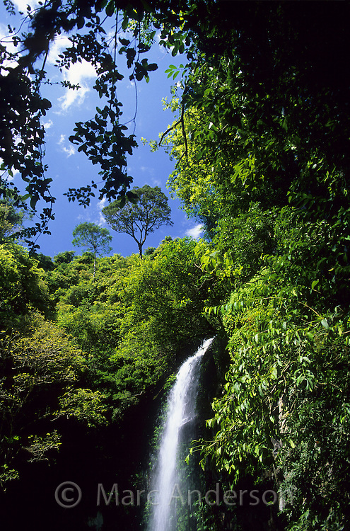 Waterfall in a rainforest, Dorrigo National Park, NSW, Australia..