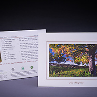 """A scenic fall landscape with a sugar maple in foliage, fields, and a stonewall.  Recipe on the back of the card for """"Kathie's Maple Pecan Cheesecake"""".  This card was custom designed for Polly's Pancake Parlor, in Sugar Hill, NH.   <br /> <br /> Artemis Photo Greeting Cards featuring NH native flora and fauna and historic sites. The cards are made exclusively in NH made from 100% FSC recycled paper, manufactured with wind and water power, and are archival acid free paper. Each card includes details on the back about the image, including interesting anecdotes, historic facts, conservation status, and recipes."""