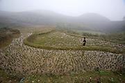 Hilltribe villages around Sapa. Black Hmong boy in rice paddy.